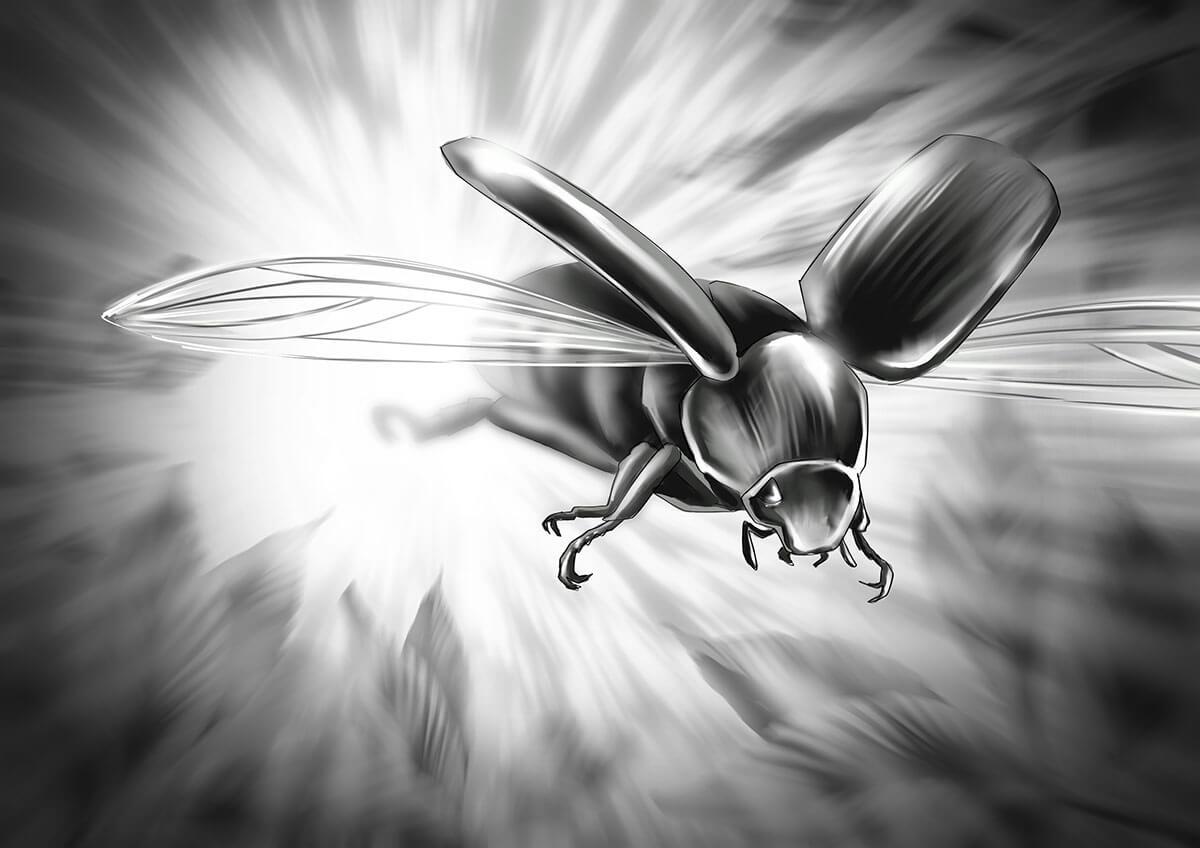 Beetle_02_Webt